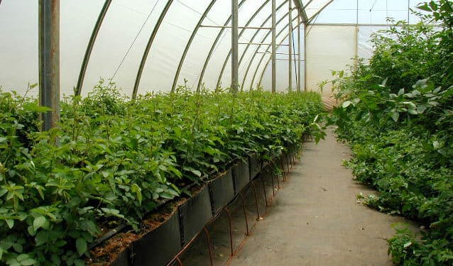 Garden Centers Polycarbonate Panels for Greenhouses