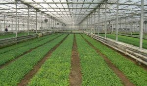 PLAZIT-POLYGAL-Agriculture Greenhouse